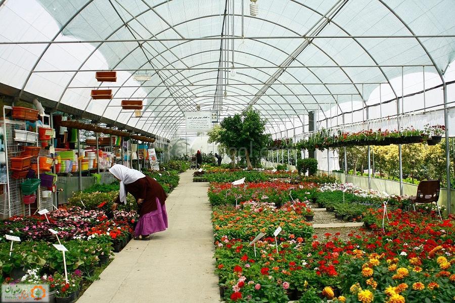 باغ گل رضوان | طراحی و اجرای فضای سبز، گل و گیاه فصلی و آپارتمانی