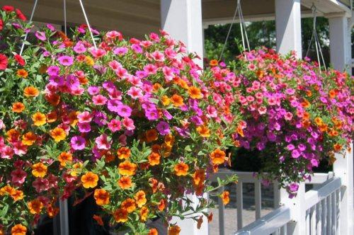 فروشگاه گل و گیاه متین