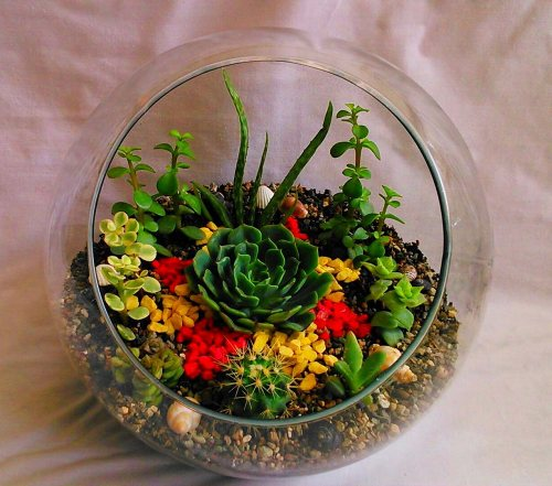سانسوریا گل | تراریوم و گلدانهای زینتی