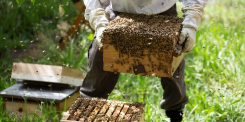 عسل اخگر | فروش عسل خالص و طبیعی