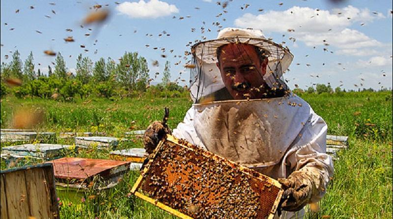 شرکت تعاونی کشاورزی شاهبو پسند خاوران | پرورش زنبور عسل