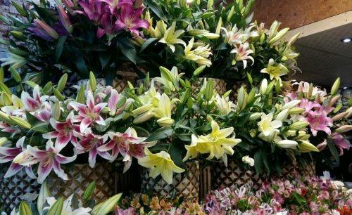 گل فروشی ونوس